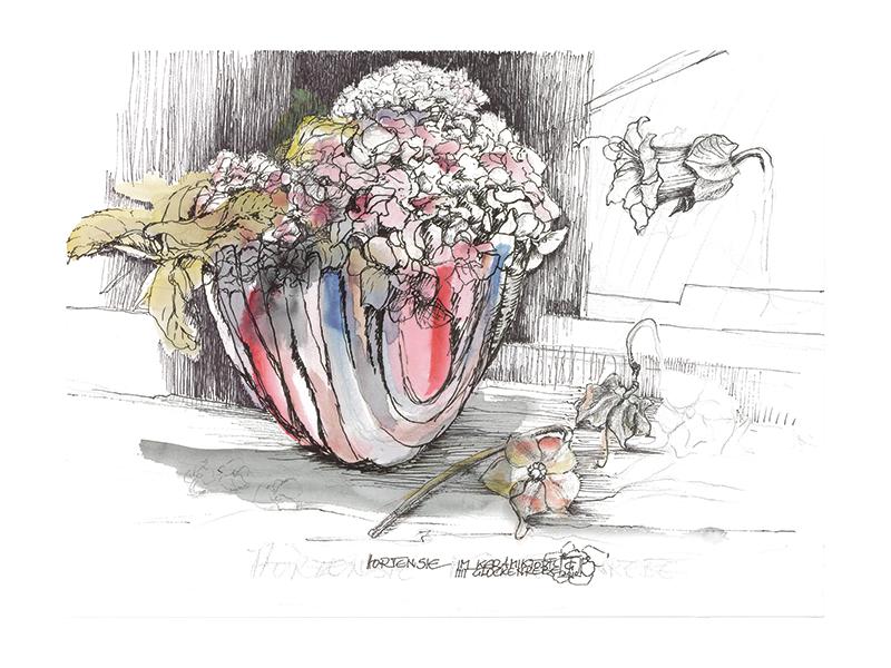 hortensie und glockenrebe