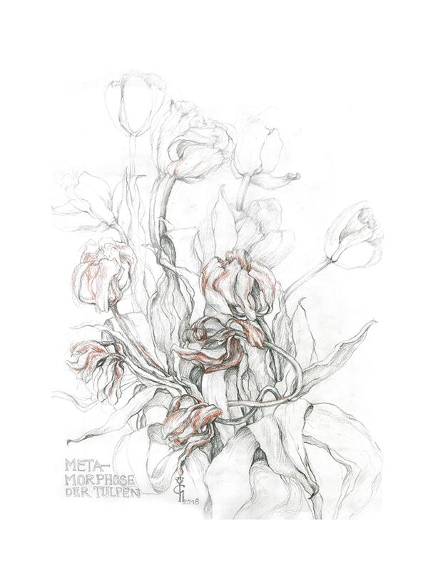 metamorphose der tulpen